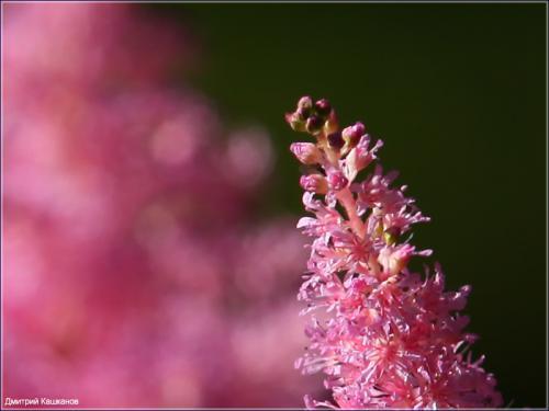 фрагмент фотографии цветка с размытым фоном