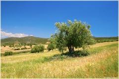 Одинокое дерево в горной долине