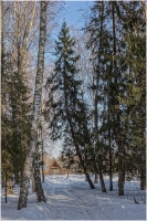 Зимняя дорога в деревню через лес