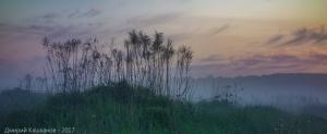 Сухая трава на фоне заката. Вечернее фото