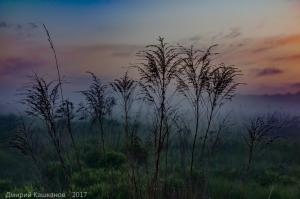 Туман, вечер, сухая трава
