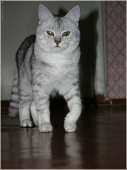 Кот на параде. Репетиция парада. Важный кот. Красивые фото котят