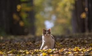 Фотография кота в осенней липовой аллее