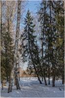 Дорога в деревню через лес. Весенний пейзаж