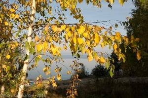 Осеннее утро с желтыми листьями и голубой водой