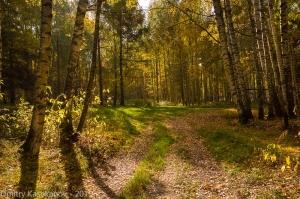 В осенний лес за грибами. Фото