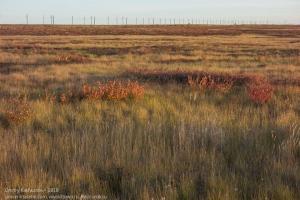 Как выглядит тундра за Полярным кругом ранней осенью