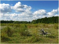 Найти корягу - хорошая примета. Самые красивые фото лета 2011