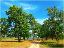 Дорога на Клязьму через дубовую рощу