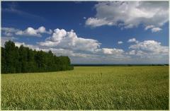 Фото пшеничного поля. Фото полей. Красивые фото лета