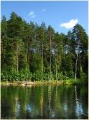 Тихое лесное озеро. Самые красивые фото лета 2011