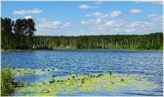 Лесное озеро. Свято озеро. Самые красивые фото лета 2011