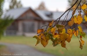 Желтые листья на фоне каретника
