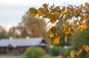 Желтые листья на фоне людской