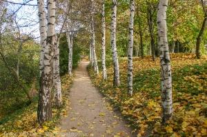 Болдинская осень. Верхняя березовая аллея в усадьбе Пушкина