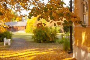 Болдинская осень. Фото с желтыми листьями на фоне усадьбы