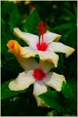 Экзотические белые цветы. Турецкие цветы