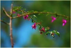 Сиреневые цветы на голубом фоне