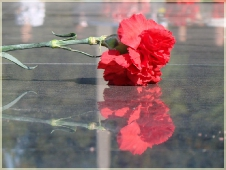 Фотографии цветов. Красная гвоздика у вечного огня