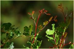 Ветки садового растения на фоне зеленой травы