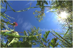 Клевер и другие полевые цветы