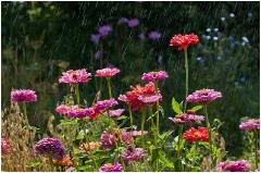 Грибной дождь. Фото цветов на клумбе под дождем