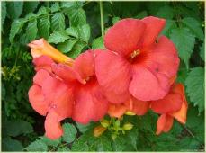 Фото цветов высокого разрешения