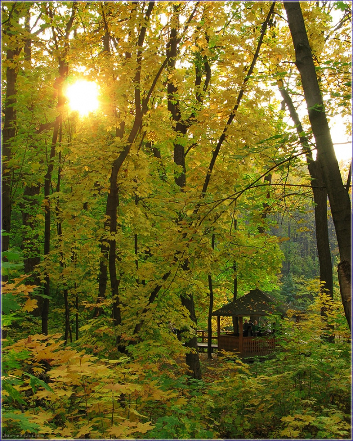 красивые солнечные картинки